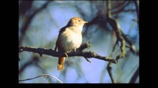 Bobby Darin A Nightingale Sang In Berkeley Square With Lyrics