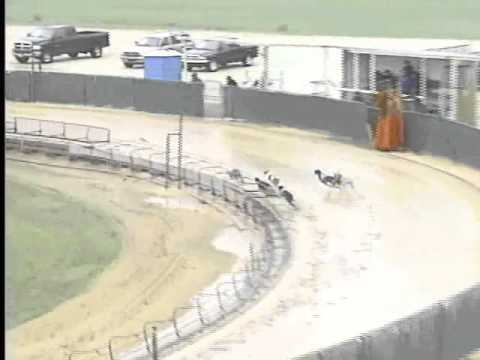 Race 32 - Abilene Animal Hospital Stake Flite I