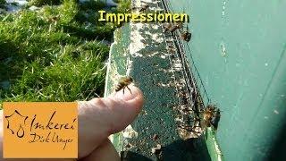 preview picture of video 'Impression am Bienenvolk: 1. Februar 2014'