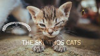SAVE SKIATHOS CATS