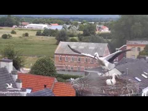 Stork Practising in the Wind - 29.06.2017