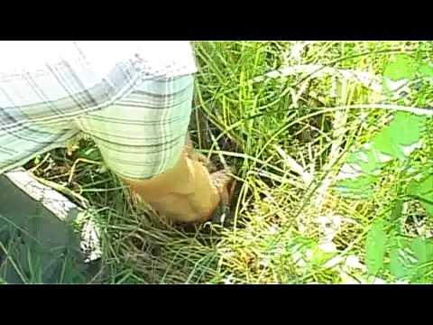Atopitscheski die Hautentzündung in den Bildern auf den Beinen