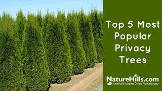 Top 5 Most Popular Privacy Trees | NatureHills.com