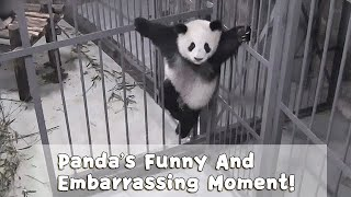 Panda's Funny And Embarrassing Moment! | iPanda