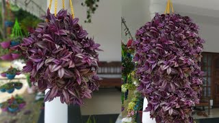 Hanging Plant Ideas|How To Make Amazing Hanging Pots| Hanging Decoration Ideas| Hanging Plants