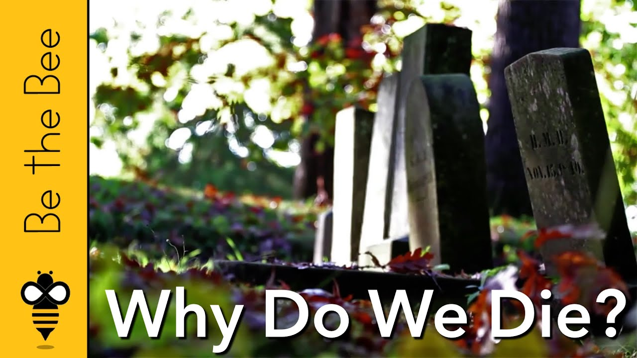 #98 Why Do We Die?