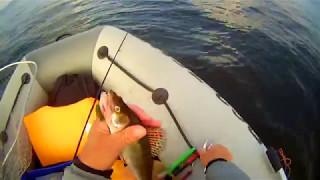 Клев рыбы в марий эл
