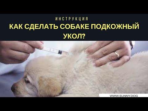 Подкожный укол, как делать? Как сделать собаке подкожный укол? Инструкция