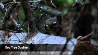 Trip video of Numa Ridge Lookout.