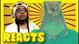Tiny Dwarf Hamster In A Tiny Playground By Aprilsanimals Funny Reaction