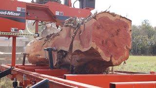 Incredible Boards From A Rare Cedar