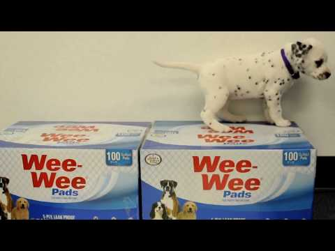 Four Paws Wee-Wee Pads (100 pads) Video
