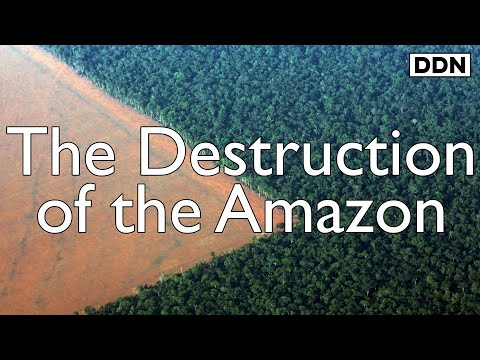 "The Destruction of the Amazon Rainforest: ""If we lose the Amazon, we lose everything"""