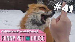 СМЕШНЫЕ ЖИВОТНЫЕ И ПИТОМЦЫ #41 МАРТ 2019 [Funny Pet House] Смешные животные