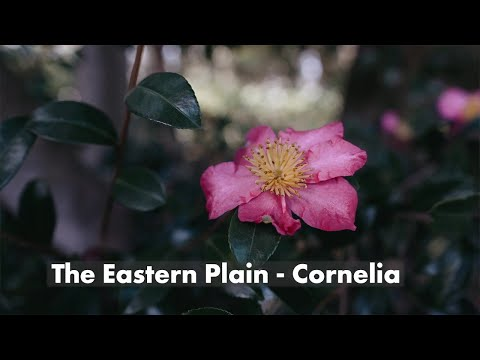 The Eastern Plain - Cornelia | 4K Music Video