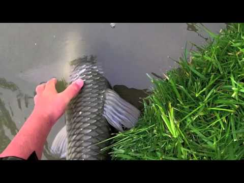 Grass Carp Fishing (24.8lb)