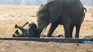 Baby elephant stuck and helpless rescued by female elephant