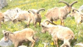 Кавказские  туры в Безенги