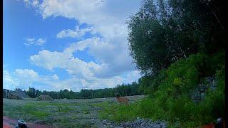 Bear meets a deer in HD // FPV