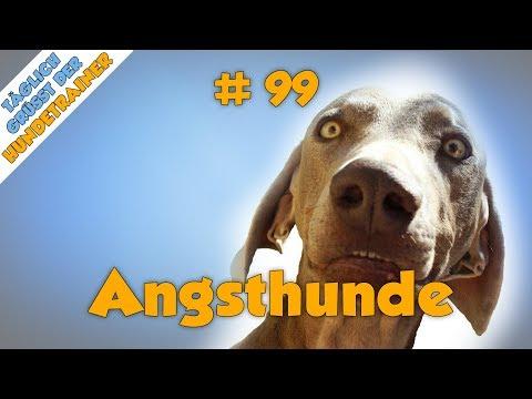 TGH 99 : Angsthund - Angst und Unsicherheit bei Hunden - Stadtfelle
