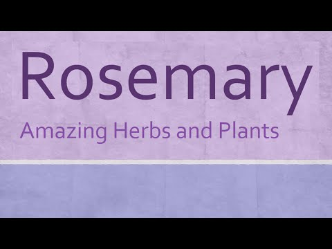 Video Rosemary Amazing Herb - Health Benefits of Rosemary - Amazing Herbs and Plants