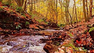 5 MINUTES IN NATURE -Autumn Riverside- 1080p VIDEO.