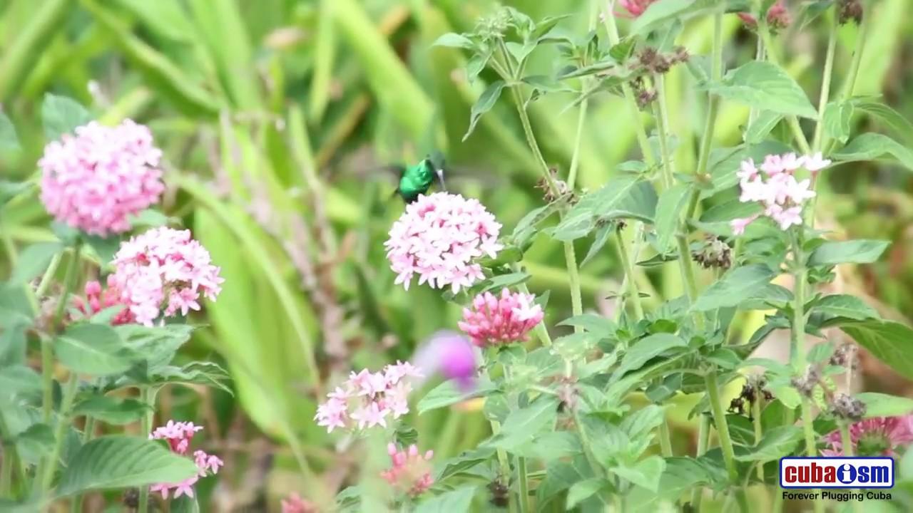 Bird Watching in Soroa - 043v01
