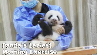 Let's Do Morning Exercise And Become As Cute As Pandas | iPanda