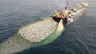 WoW !! Fishing Boat Catch A Lot Of Fish - Big Catch !