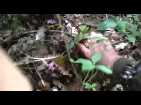 Su una medicina di fungo a mano