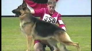 How to Evaluate the German Shepherd Dog in the Show Ring - Part 1 of 2