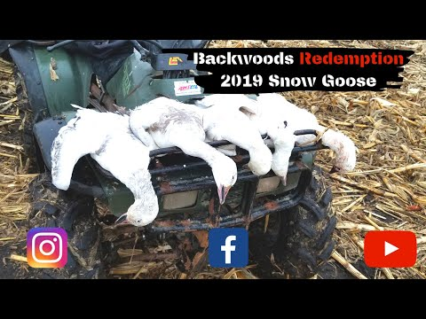 2019-south-dakota-snow-goose-hunt