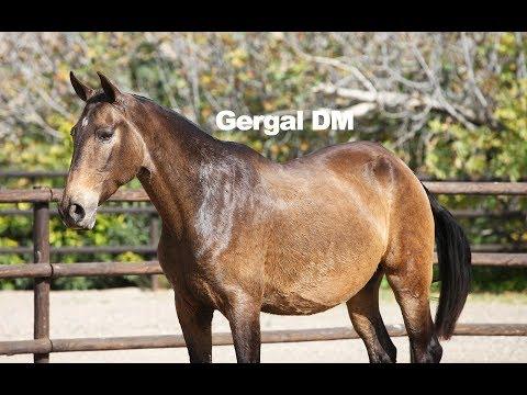 Yegua Baya - Gergal DM - Dic 2018