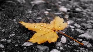 LAKE OF TEARS   So Fell Autumn Rain
