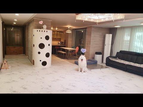 狗與貓的新房!