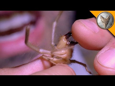 Ahhh!!! Camel Spider Chews My Finger!
