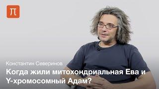 Северинов Константин — Митохондриальная Ева