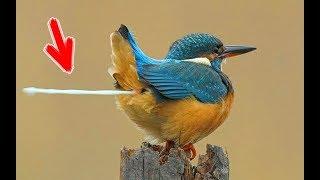 7 Самых Причудливых Птиц в Мире. Очень редкие птицы, которых трудно встретить в дикой природе