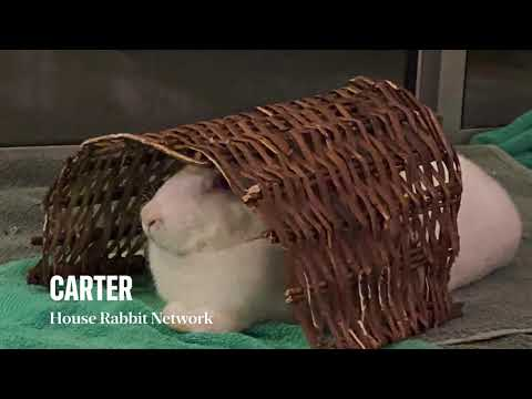 Carter, an adopted Florida White in Woburn, MA