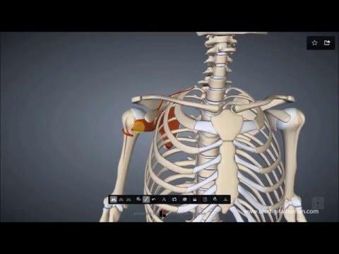 Heimultraschallgerät für die Behandlung von Gelenken