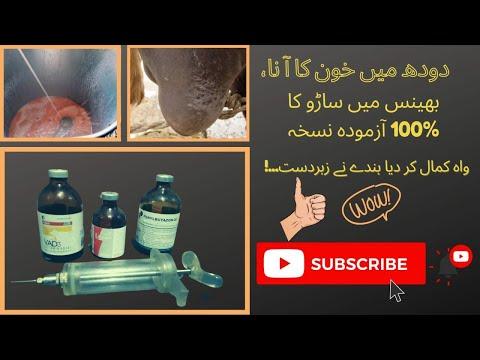 , title : 'Blood in milk of buffalo II Red milk in buffalo II Treatment of blood in milk II Red milk  treatment