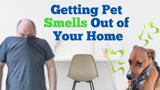 How To Get Rid Of Pet Smells In A House