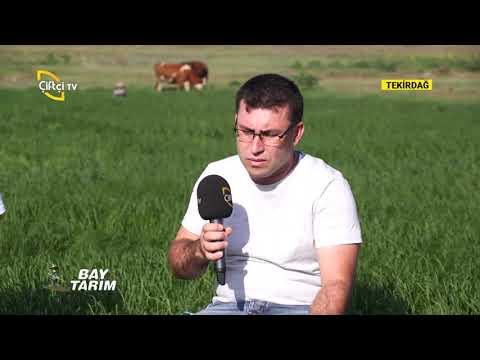 , title : 'TRAKYA'DA TEFF GRASS (YAZLIK OT) YETİŞTİRİCİLİĞİ-BAY TARIM/ÇİFTÇİ TV