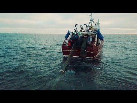 Ευρώπη: Εντυπωσιακή ανάκαμψη των αλιευτικών αποθεμάτων…