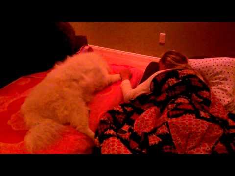 Video Sick Dog Hard To Say Goodbye Renal Failure American Eskimo