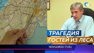 Два молодых лося погибли в Великом Новгороде