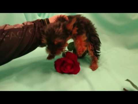 Romeo is a precious little fella