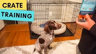Introducing The CRATE To A Puppy | German Shorthaired Pointer