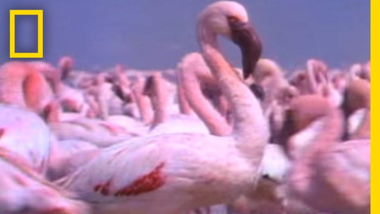 Giant Animal Swarms | Weird Nature thumbnail