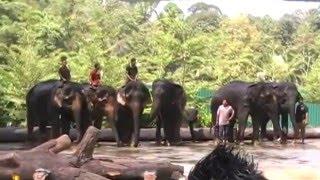 Elephant Presentation At Kuala Gandah Elephant Sanctuary